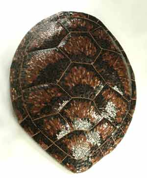 creative mosaic shell