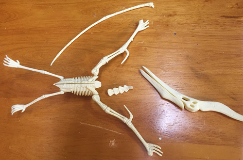 pterodactyl model kit